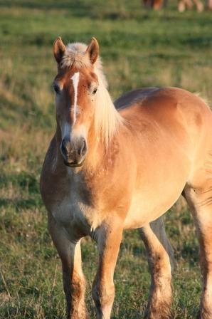 Jed's horse, Buddy.