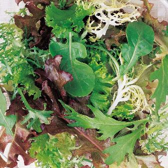 Spicy Mix Mesclun