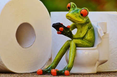 Frog on commode.