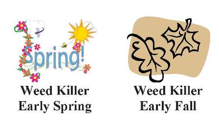 Use weed killer in early spring and early fall.