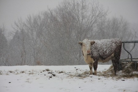 Winter in Jed's cow pasture.