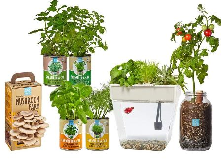 Back to the Roots – The Urban Homesteader Gift Set