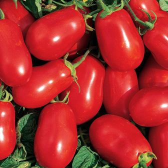 Tomatoes - Roma Organic