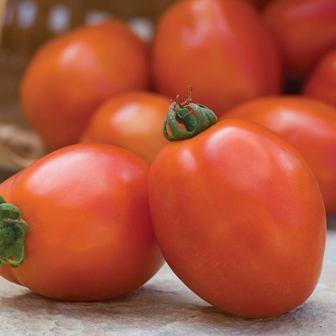 Tomatoes - Principe Borghese