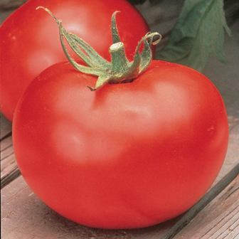 Tomatoes - Better Boy Hybrid