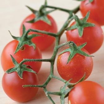Tomatoes - Red Currant