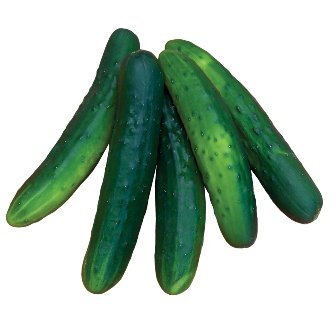 Salad Bush Cucumbers