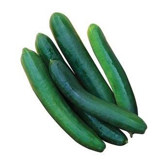 Sweet Success Cucumbers