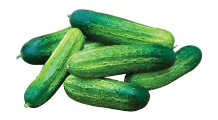 Pick-A-Bush Cucumbers