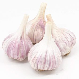Chesnok Red Garlic Bulbs