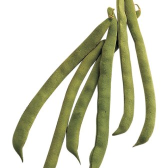 Pole Beans - Kentucky Wonder