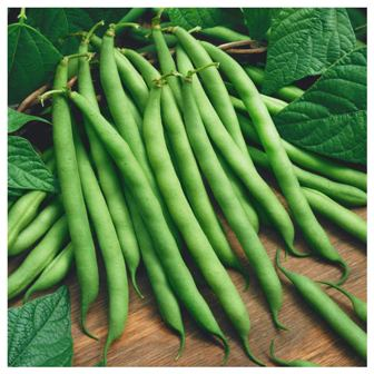 Pole Beans - Blue Lake