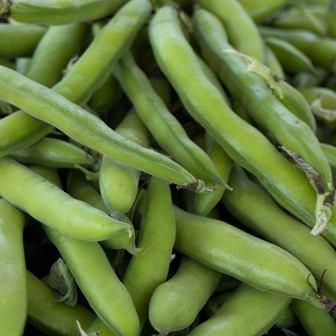 Bush Beans - Roma II