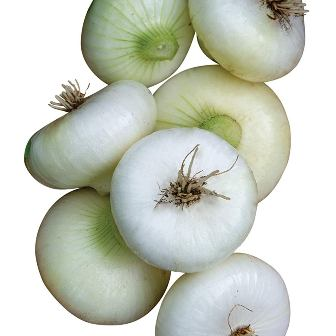 Onion - Cippolini White