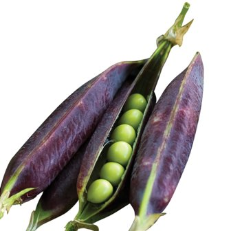 Peas - Purple Podded