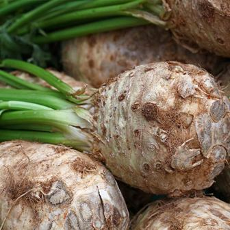 Celeriac variety - Giant Prague - Mountain Valley Seeds