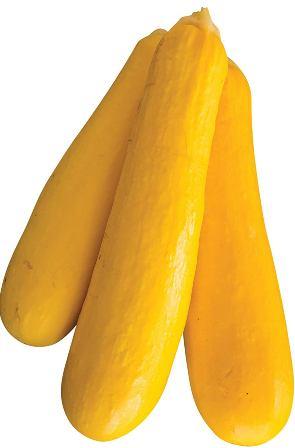 Yellow Squash - Butterstick Zucchini