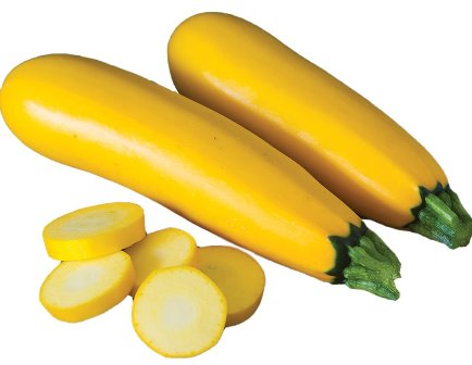 Yellow Squash - Gourmet Gold
