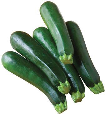Zucchini - Elite Hybrid