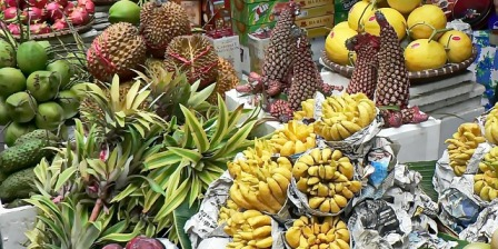 Rare exotic fruit plants.