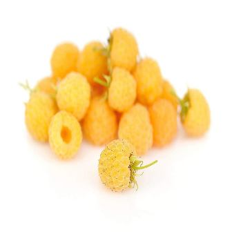 Grower's Solution - Fall Gold Raspberries