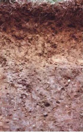 Paxton soil - state soil of Massachusetts