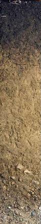 Narrangansett soil - state soil of Rhode Island