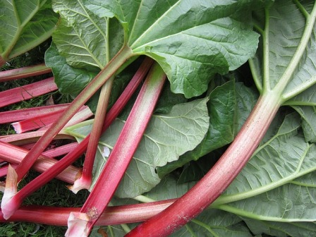 An armful of rhubarb stalks and leaves.