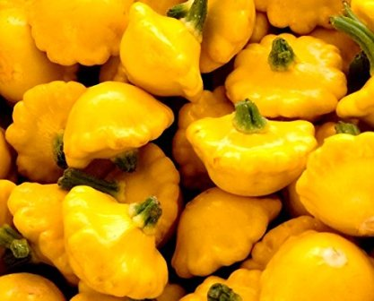 Garden Seeds Market has some excellent yellow pattypan seeds.