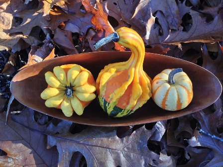 Rare Exotic Plants - Squash