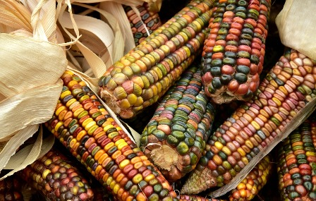 Glass Gem Corn