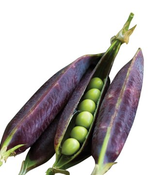 Burpee heirloom purple podded pea seeds