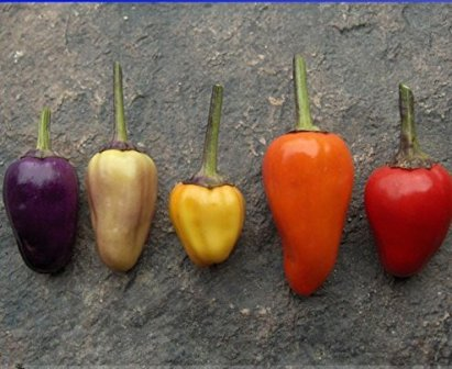 Solution Seeds Farm - Chinese five color peppers