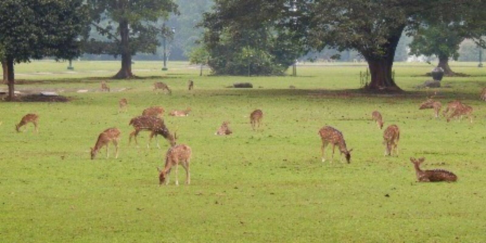 """Chapter 2 """"Deer Invade My Garden"""""""