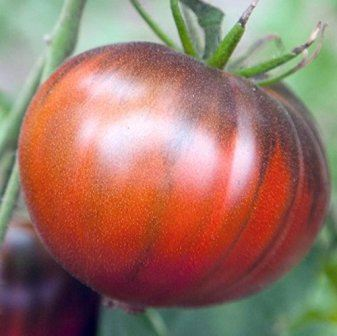 Black Sea Man tomato seeds.