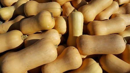 Growing butternut squash is a brainy choice.
