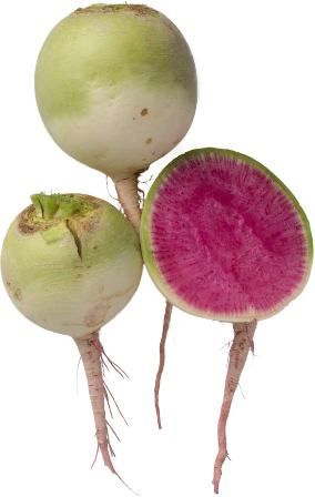 Isla's Garden Seeds - watermelon radish seeds